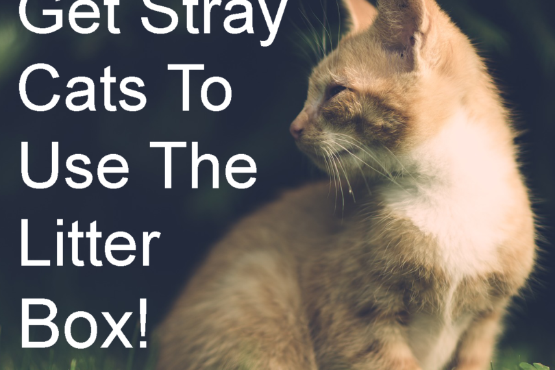 how to use cat litter